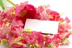 Tulipanes, pétalos y tarjeta de visita. Fotografía de archivo libre de regalías