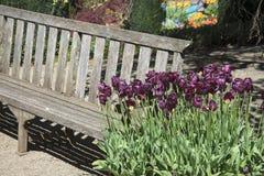 Tulipanes púrpuras Imágenes de archivo libres de regalías