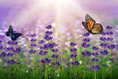 Tulipanes púrpuras con verde cubierto de rocio y mariposas Fotos de archivo libres de regalías