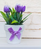 Tulipanes púrpuras decorativos en una maceta blanca con un arco púrpura Foto de archivo