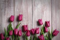 Tulipanes púrpuras hermosos imagen de archivo