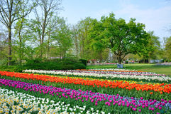 Tulipanes púrpuras, rojos, blancos y anaranjados en Keukenhof Imágenes de archivo libres de regalías