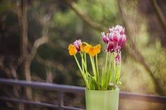 Tulipanes púrpuras y amarillos hermosos en florero verde en la tabla de madera afuera r imágenes de archivo libres de regalías