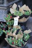 Tulipanes para la venta foto de archivo libre de regalías