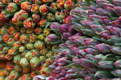 Tulipanes para vender Foto de archivo