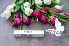 Tulipanes por el día de fiesta de la primavera con la mariposa hermosa Imagen de archivo libre de regalías