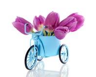 Tulipanes púrpuras en un bycicle Fotografía de archivo libre de regalías