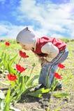 Tulipanes que huelen del muchacho Fotografía de archivo libre de regalías