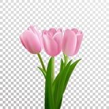 Tulipanes Ramo rosado de los tulipanes del vector aislado Flores en diversas formas stock de ilustración