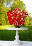 tulipanes Rojo-y-blancos en un florero gris en un soporte de flor blanca foto de archivo