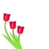Tulipanes rojos Ilustración del Vector