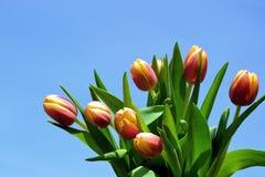 Tulipanes rojos Imágenes de archivo libres de regalías