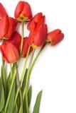 Tulipanes rojos Foto de archivo libre de regalías