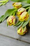 Tulipanes rojos amarillos Imagen de archivo