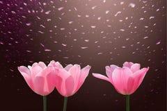 Tulipanes rojos con descenso en lluvia Imagen de archivo libre de regalías