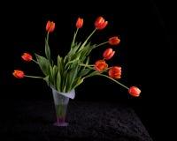 Tulipanes rojos en florero Foto de archivo libre de regalías