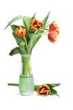 Tulipanes rojos en florero Imagen de archivo libre de regalías