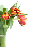 Tulipanes rojos en florero Imagenes de archivo