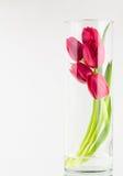 Tulipanes rojos en florero de cristal alto Foto de archivo