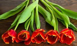 Tulipanes rojos en fondo marrón Imágenes de archivo libres de regalías