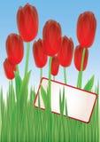 Tulipanes rojos en la hierba 1 Fotografía de archivo