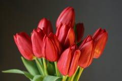 Tulipanes rojos en negro Fotos de archivo