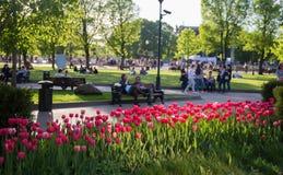 Tulipanes rojos en parque foto de archivo