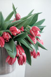 Tulipanes rojos en un cubo del hierro Fotografía de archivo libre de regalías