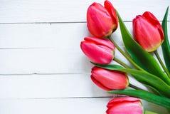 tulipanes rojos en un fondo blanco Fotos de archivo libres de regalías