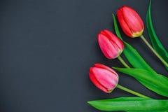 Tulipanes rojos en un fondo negro Foto de archivo