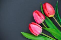 Tulipanes rojos en un fondo negro Foto de archivo libre de regalías