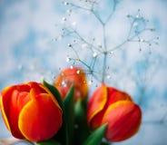Tulipanes rojos florecientes en un fondo de madera azul Foto de archivo