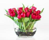 Tulipanes rojos hermosos en un florero de cristal imagen de archivo