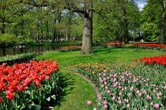 Tulipanes rojos, rosados, amarillos en Keukenhof Imagenes de archivo
