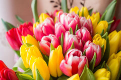 Tulipanes rojos y amarillos Fotos de archivo libres de regalías