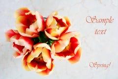 Tulipanes rojos y amarillos de gastos indirectos Imagen de archivo libre de regalías