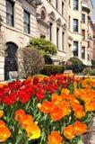 Tulipanes rojos y anaranjados en la ciudad Fotos de archivo