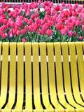 Tulipanes rojos y banco amarillo Imagenes de archivo