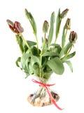Tulipanes rojos y rococó verde en un bolso Imagenes de archivo