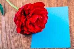 Tulipanes rojos y tarjeta en blanco para el día de madre Fotografía de archivo libre de regalías
