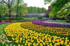 Tulipanes rosados, amarillos, púrpuras y blancos Imágenes de archivo libres de regalías