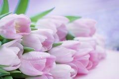 Tulipanes rosados con el primer del rocío La primavera florece, fondo floral romántico natural del extracto fotografía de archivo libre de regalías