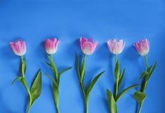 Tulipanes rosados de Pascua Foto de archivo