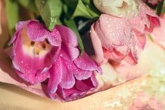 Tulipanes rosados delicados Foto de archivo libre de regalías