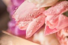 Tulipanes rosados delicados Imágenes de archivo libres de regalías