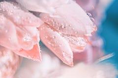 Tulipanes rosados delicados Imagen de archivo libre de regalías