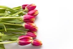 Tulipanes rosados en blanco Fotografía de archivo libre de regalías