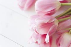 Tulipanes rosados en el fondo blanco Foto de archivo