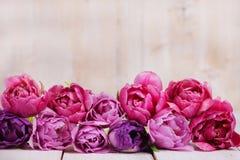 Tulipanes rosados en fila Imágenes de archivo libres de regalías