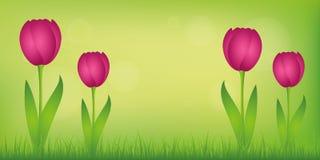 Tulipanes rosados en prado verde y fondo verde de la primavera ilustración del vector